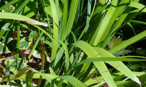 Juin 2011 : Avec les chaleurs, la nature se prépare à la sécheresse...