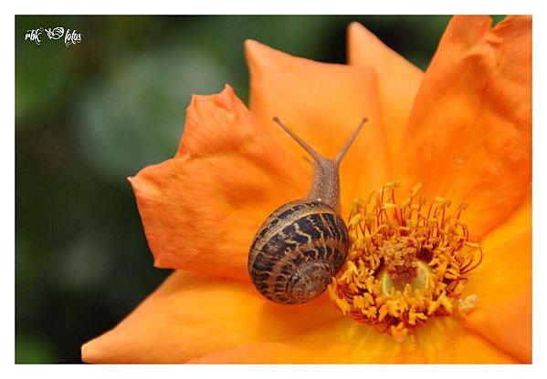escargot land @ rbk-fotos (4)