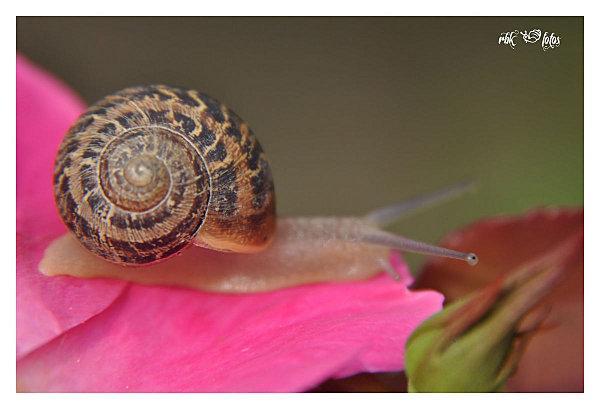 escargot land @ rbk-fotos (3)