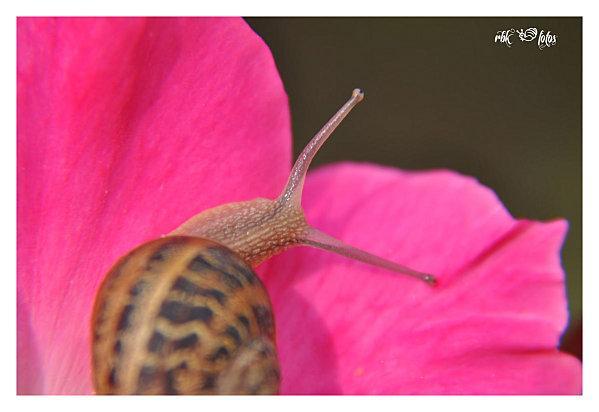 escargot land @ rbk-fotos (5)