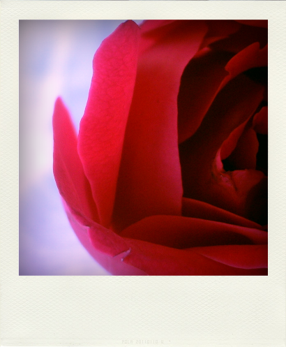 ROSES ROUGES (4)