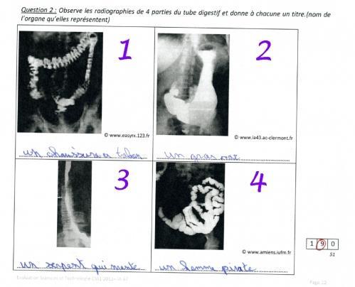 Perles d'élèves – 5