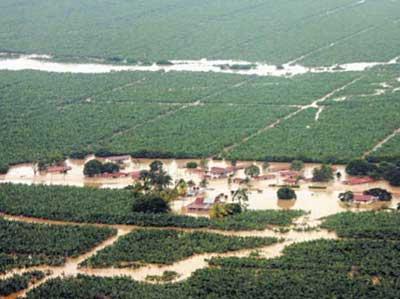 L'agro-industrie au Costa Rica : une agriculture esclavagiste et dévastatrice