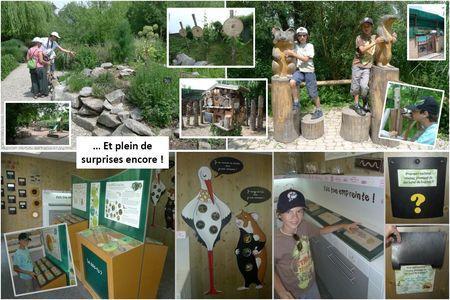 Blog_Hunawihr_parc_cigognes__4_