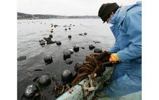 japan tsunami oyster huitre planet finance