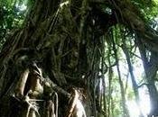 Concours photo: forêt, Votez jnyaroundtheworld!