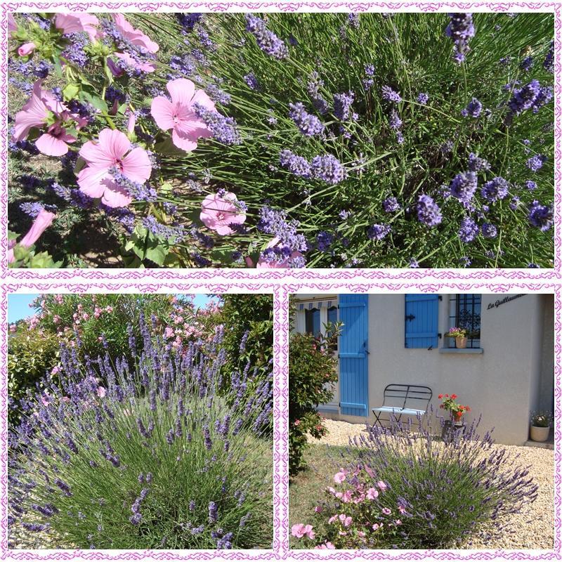 Balade Florale Chez Nous Paperblog