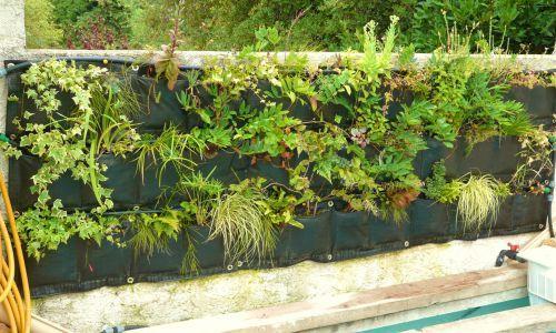 Mur v g tal 6 mois apr s en plein t succ s et checs for Cacher un mur de jardin