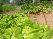 prison pour faire pousser légumes