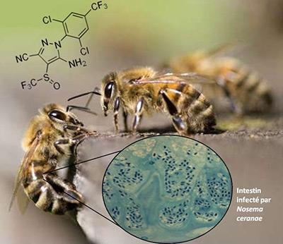 http://media.paperblog.fr/i/467/4677244/insecticides-surmortalite-abeilles-L-Nn9g8Y.jpeg