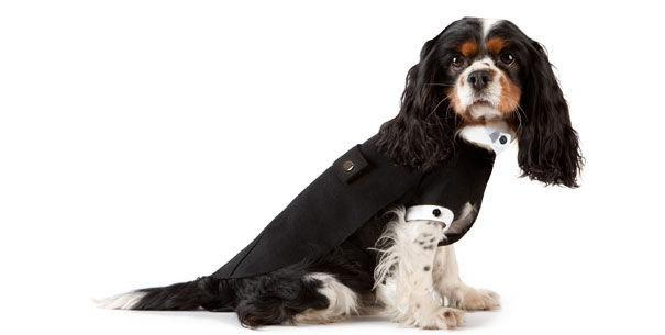 armani habille les chiens paperblog. Black Bedroom Furniture Sets. Home Design Ideas