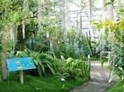 Brest. Conservatoire botanique chevet espèces végétales menacées disparition