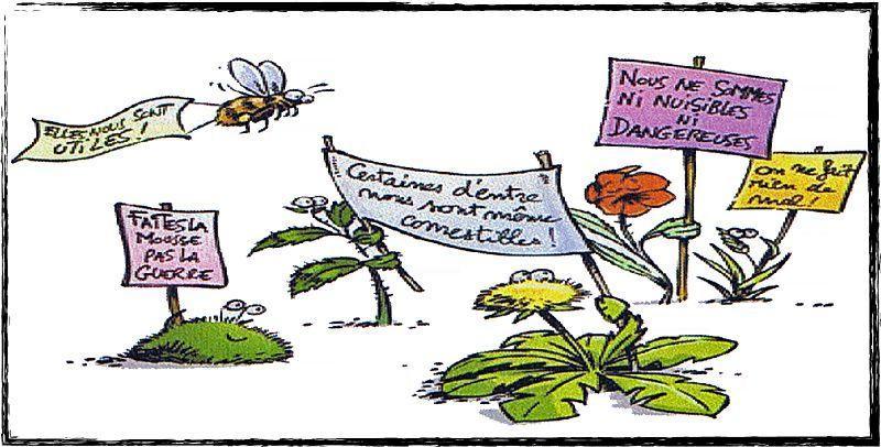 R habilitons les mauvaises herbes paperblog for Detruire les mauvaises herbes
