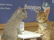 Bouygues Telecom Lolcats