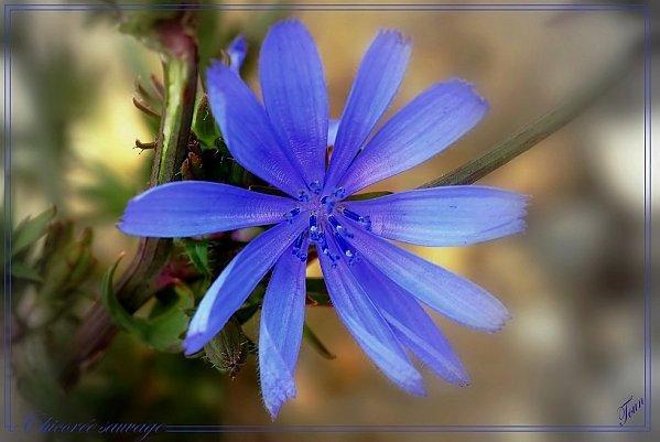 Herbe verte fleurs bleues chanson paperblog - Fleurs bleues grimpantes ...