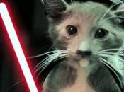 Star Wars avec chats