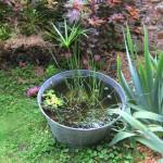 D co jardin cr er un mini bassin aquatique d couvrir for Mini bassin aquatique