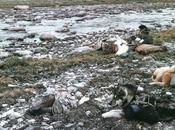 peur sila donne tempetes »les inuit sagesse territoire(8)