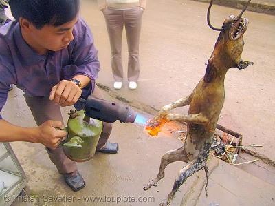 http://media.paperblog.fr/i/496/4969716/viande-chien-sauvetages-intermittents-torture-L-OpYVTe.jpeg