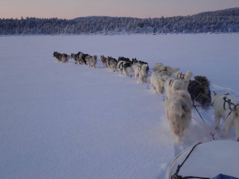 Train-de-17-chiens