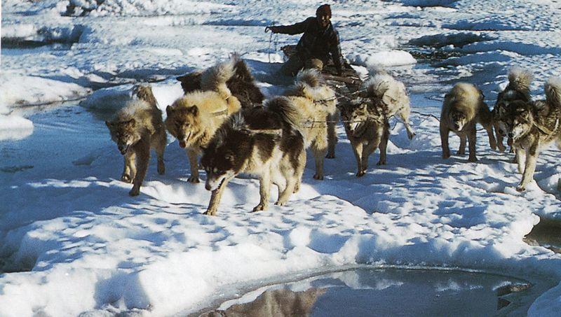 Inuit119