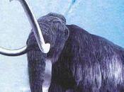 piste mammouth Bernard Buigues