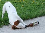 bière pour chiens goût viande