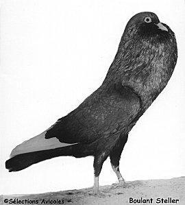 une fa on de nourrir les pigeons lire. Black Bedroom Furniture Sets. Home Design Ideas