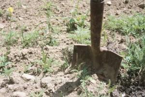 Peut on enterrer son chien dans son jardin oui mais for Creuser un puits dans son jardin