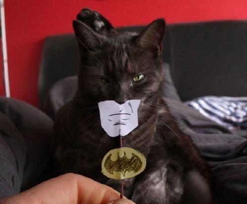 Exposition de minoux meow meow Selection-dimages-geeks-insolites-iv-L-rSAQAc