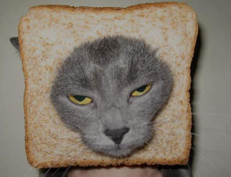 Le breading cats : transformer votre chat en lion