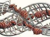 fourmis sont triangles nature, morale liberté