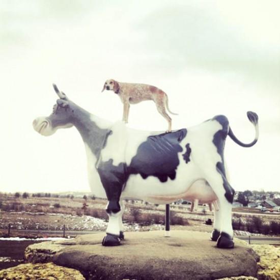 Theron Humphrey, une vraie vie de chien
