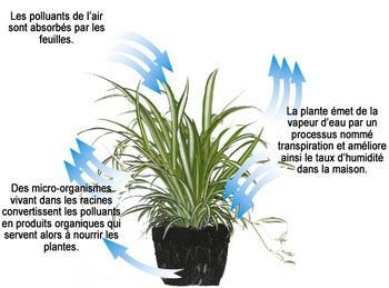 Processus_plante