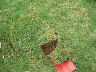 Comment planter de la rhubarbe dans une bassine en zinc ? - Paperblog