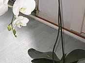 L'Orchidée, must-have moment