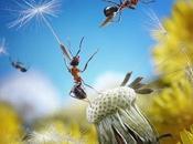 fourmis prennent pose