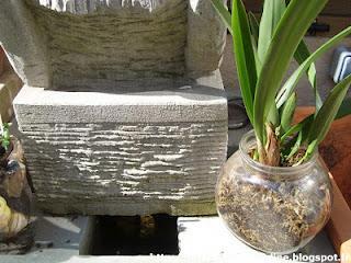Rempotage des orchid es paperblog - Orchidee entretien apres floraison ...