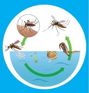 Essay on dengue