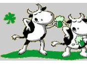 Irish fourmipat's