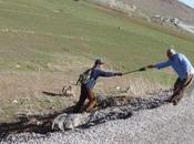 Piolet suisse offert jeune berger kurde