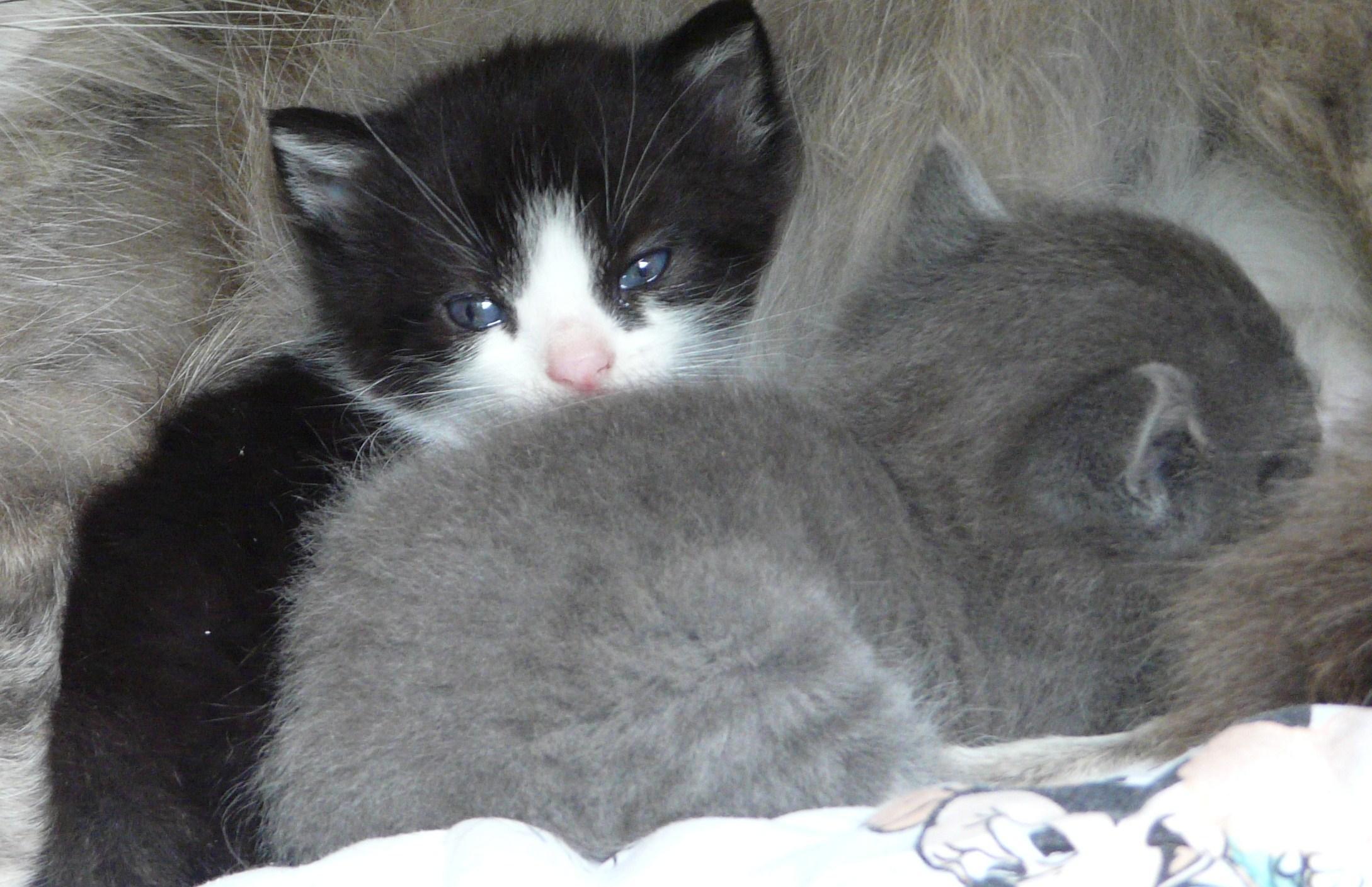 Comment repousser les chats naturellement paperblog - Comment faire fuir les chats ...