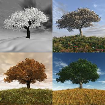 Le poirier qui traverse les saisons
