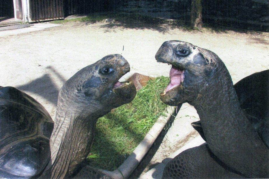 Deux tortues séparées après 36 ans de vie commune
