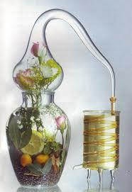 Les Essentiels de Botanikap – le top 5 des ingrédients hydratants
