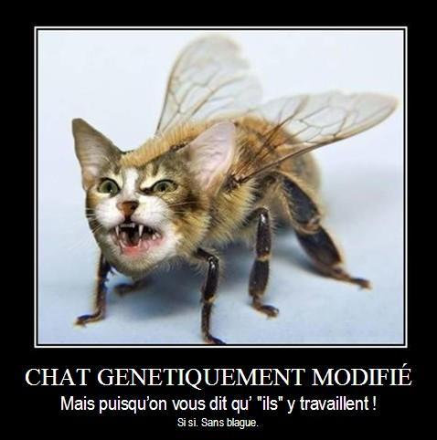 Chat OGM - mais si, puisqu'on vous dit qu'ils y travaillent !