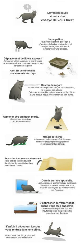 Comment savoir si votre chat projette de vous tuer ?