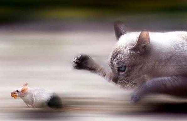 Top 10 des photos d'animaux les plus insolites
