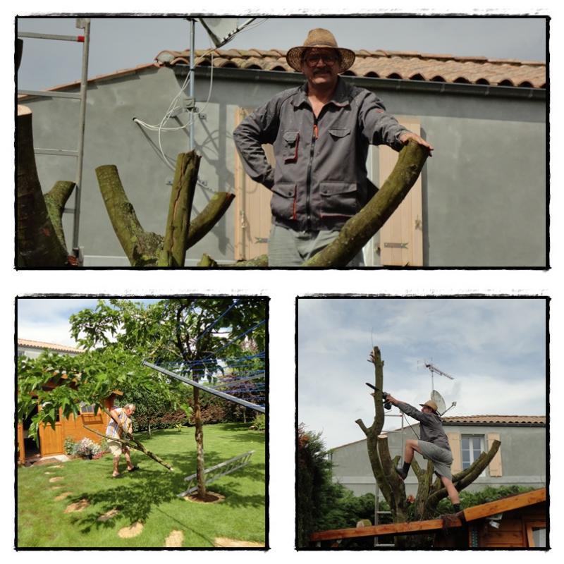 Le destin du mimosa, 11 juin 2012