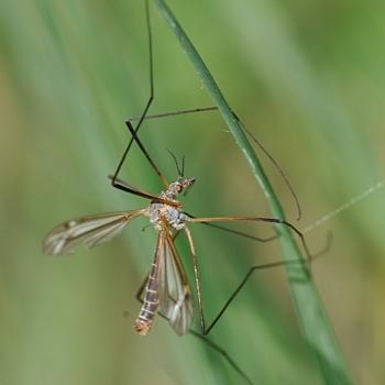 les moustiques sont de bonnes mères, voilà tout.